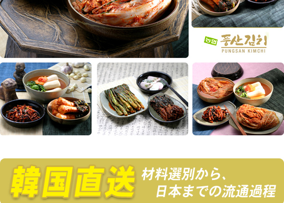韓国農協 キムチ